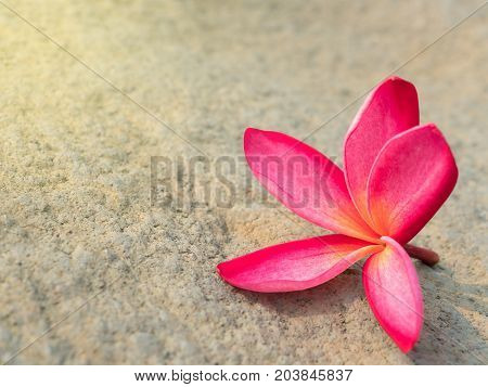 Close-up image of red Frangipani flower on cement floor with copy space