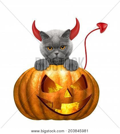 halloween pumpkin with cute cat - isolated on white background