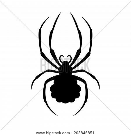 Spider ( Araneae ) ( shade picture )