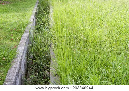 Cement water groove in the wild grass