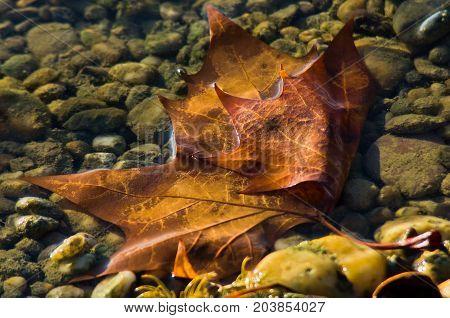 Fallen brown leaf in a water stream at autumn, Topcider park, Belgrade Serbia