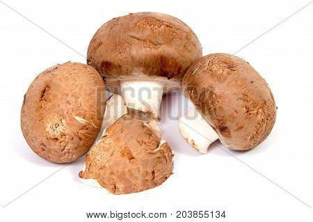 Set Champignon mushroom isolated on white background.