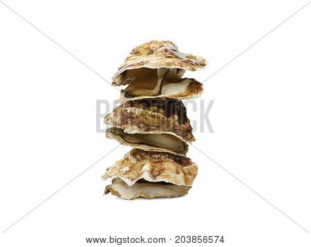 Several seashells. Macro view of seashells. Composition of exotic sea shells and starfish on a white background. top view