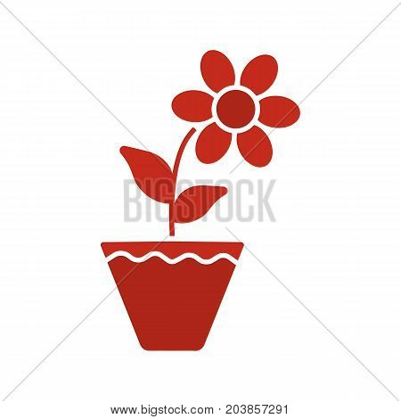 Crocus in flowerpot glyph color icon. Silhouette symbol on white background. Negative space. Vector illustration