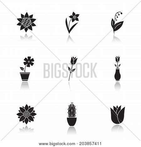 Flowers drop shadow black glyph icons set. Sunflower head, daffodil, may-lily, hibiscus, roses, lotus, cactus, rosebud. Isolated vector illustrations