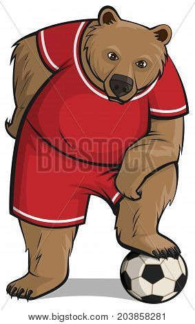Bear athlete steps foot on soccer ball. Isolated on white vector cartoon illustration