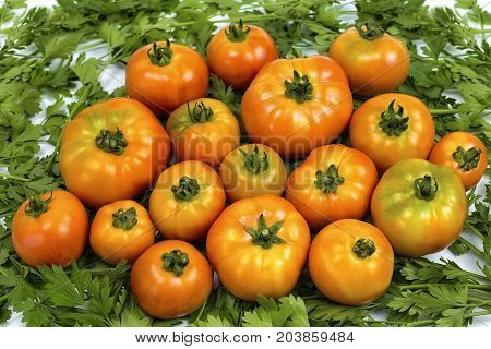 for a culinary book, homemade tomatoes are on parsley, red tomatoes on green parsley,