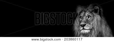 High contrast black and white of a lion face