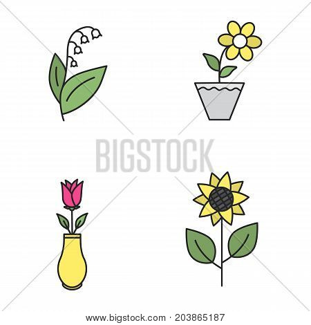 Flowers color icons set. Lily of the valley, crocus in flowerpot, rose in vase, sunflower. Isolated vector illustrations