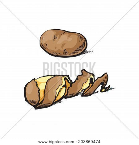 vector sketch cartoon ripe raw unpeeled, peeled yellow potato with spiral twisted peel. Isolated illustration on a white background. Vegetable fresh natural product, healthy lifestyle, eating concept