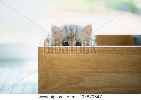 Lonely Kitten In Box