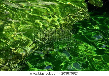 Close up of green pond water in sunshine