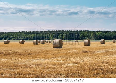 Harvested hay field with round spool shaped bales of hay with clouds and pink and blue sky