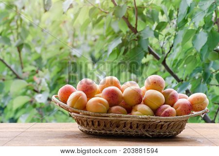 Wicker Basket Of Apricot On A Green Background, Daylight