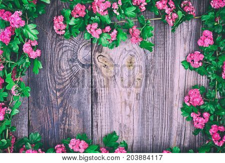 hawthorn branches with pink flowers and green leaves are arranged along the perimeter of the gray wooden background empty space in the middle