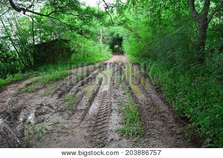 The  Muddy Way In Farmland With Print Of Wheel