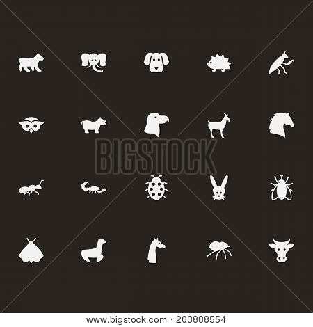 Collection Of Housefly, Poisonous, Kine And Other Elements.  Set Of 20 Alive Icons Set.