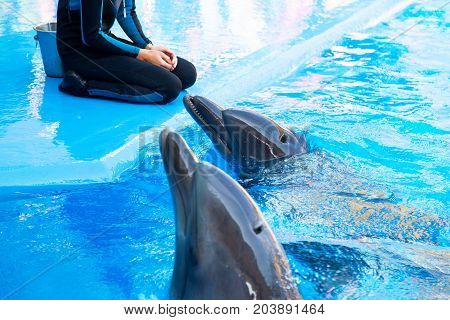 Odessa, Ukraine - September 02, 2017: Dolphins On Creative Entertaining Show At Dolphinarium With Fu