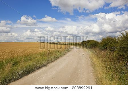 Limestone Farm Track And Wheat
