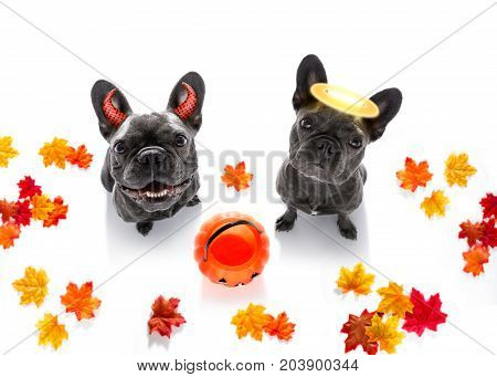 Halloween  Ghost  Dogs Trick Or Treat