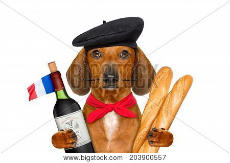 French  Sausage  Dog