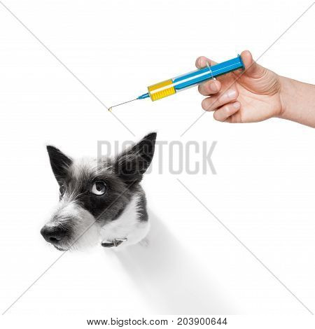 Dog And Vaccine Syringe