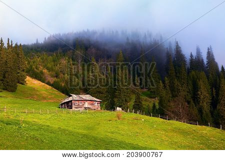 The old fenced off hut stands on a mountain meadow behind which stands the spruce forest from which thick fog raises straight up in the sky.