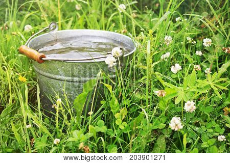 It is raining. Bucket with rain water in the grass