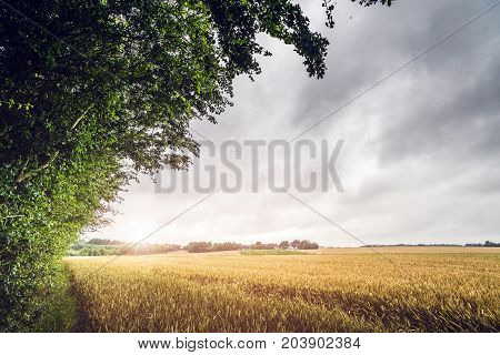 Countryside Sunset On A Field Landscape