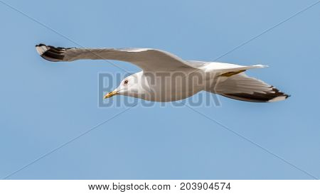 a single seagull flying in a blue sky