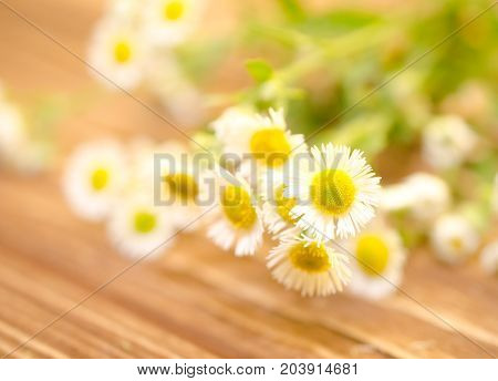 Beautiful blurred wild chamomile flowers against the wooden background (very shallow DOF selective focus)