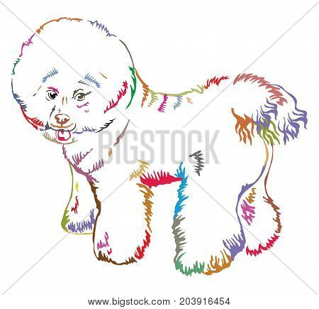 Colorful decorative portrait of standing in profile Bichon Frise vector isolated illustration on white background