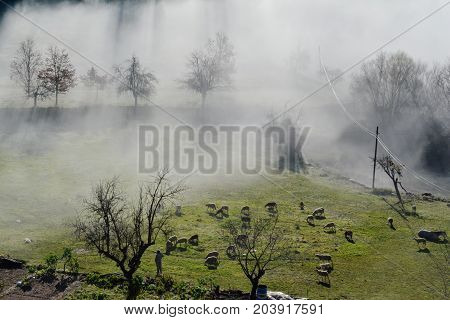 farmer; agriculture; sheep; horse; fog; in the morning