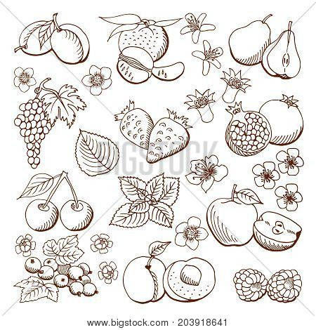Collection of cartoon fruits and berries. Vector illustration. Set of fruit and berry icons.Black outline. Isolated.Web icon hand drawn in doodle style.Design elements.