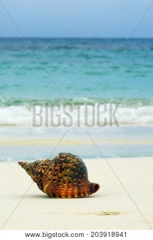 Detail Of Seashell In Sand. Sunny Day At Montego Bay Beach, Jamaica