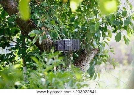 retro old black cassette tape recorder on the green tree