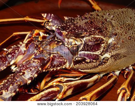 Portrait of a spiny lobster in purple tones. Cooking Star