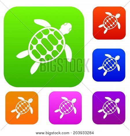 Turtle set icon color in flat style isolated on white. Collection sings vector illustration
