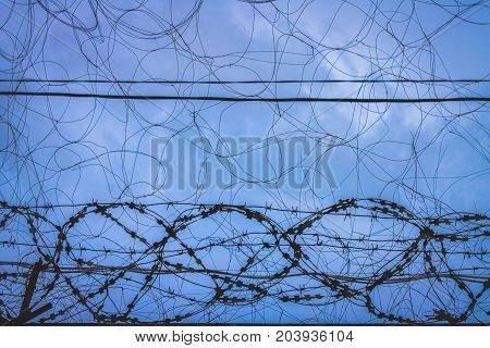 Barbed Wire. Barbed Wire On Fence With Blue Sky To Feel Worrying.
