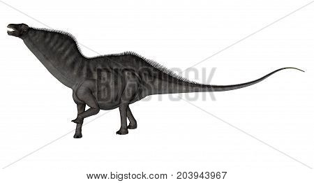 Amargasaurus dinosaur walking and roaring isolated in white background - 3D render