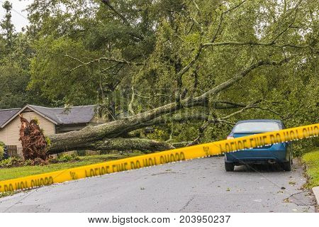 Horizontal photo of fallen tree in a street with caution tape up after Tropical Storm Irma (logos edited out)