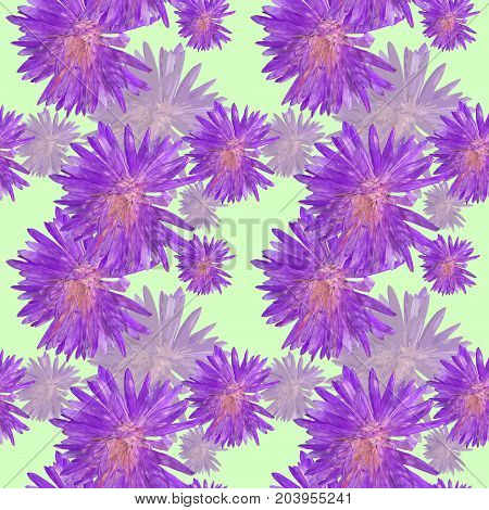 Aster Michaelmas daisy. Texture of flowers. Seamless pattern for continuous replicate. Floral background photo collage