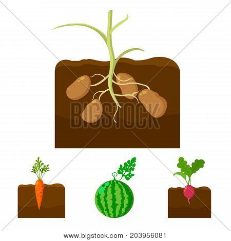 Watermelon, radish, carrots, potatoes. Plant set collection icons in cartoon style vector symbol stock illustration .