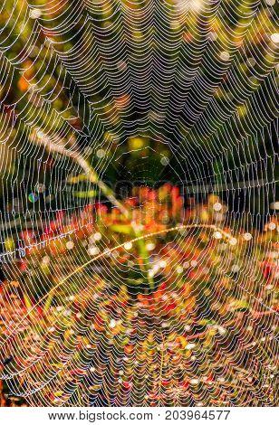 Web On Beautiful Forest Bokeh
