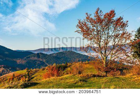 Tree On Hillside On Autumn Mountains