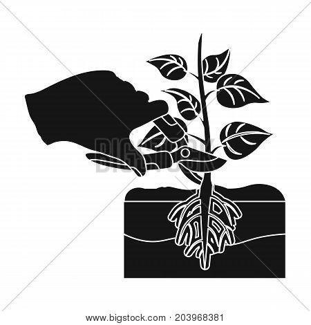 Plants, single icon in black style .Plants, vector symbol stock illustration .