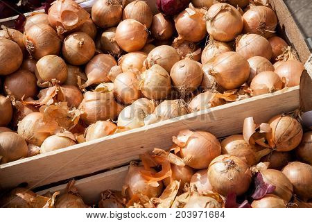 A crate of common onions on display in a vegetable shop
