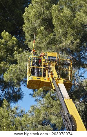 Tree work pruning operations. Crane and pine wood forest. Vertical