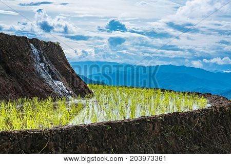 Water is flowing from a higer layer of rice terrace to a lower layer of rice terrace with mountains at the background in a cloudy light.