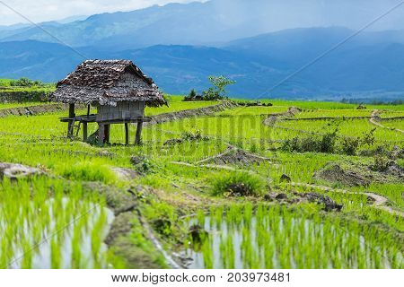 little hut and Rice terrace in a cloudy lighting surrounded by trees and mountains at Pa Bong Piang near Inthanon National Park and Mae Chaem Chiangmai Thailand.
